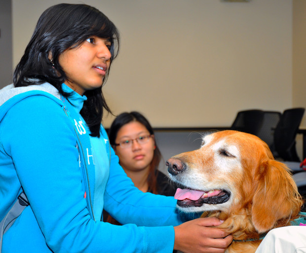 Som Pulumati, a sophomore actuarial science major from India, pets Heidi, a golden retriever during the Healing Hearts Therapy Dog visit on Oct. 15. Pulumati is talking with Heidi's owner Joy Blythe (not pictured).