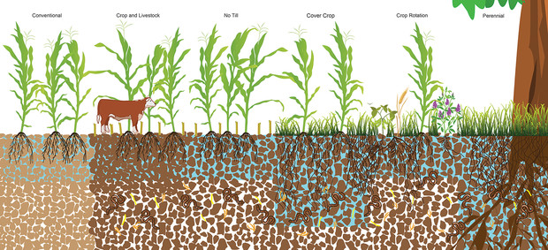 An illustration comparing how various agricultural practices affect water's infiltration of soils, based on a meta-analysis of 89 studies across six continents.