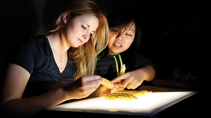 Nebraska's Leandra Marshall (left) and Ying Ren examine popcorn kernels.