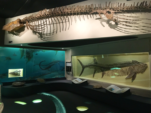 Morrill Hall exhibitions feature creatures that once thrived in the shallow inland sea that covered Nebraska some 100 million years ago.