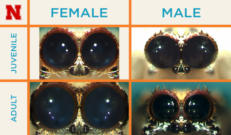 Male vs. Female Eyes