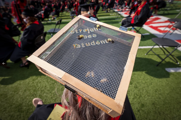 """Courtney Waller decorated her mortar board with a wire cage that included live bees buzzing about on the inside and fake bees on the outside. The design declared that she was a """"straight bee student."""""""