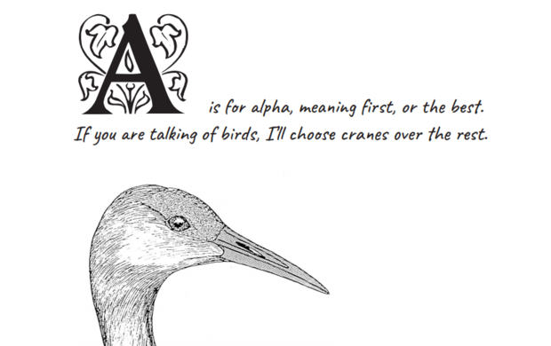 """Excerpt from Paul Johnsgard's """"S is for Sandhill: A Crane Alphabet."""" A is for alpha, meaning first, or the best. If you are talking of birds, I'll choose cranes over the rest."""