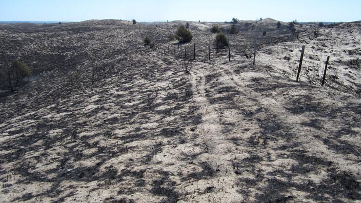 2012 Wildfire devastation