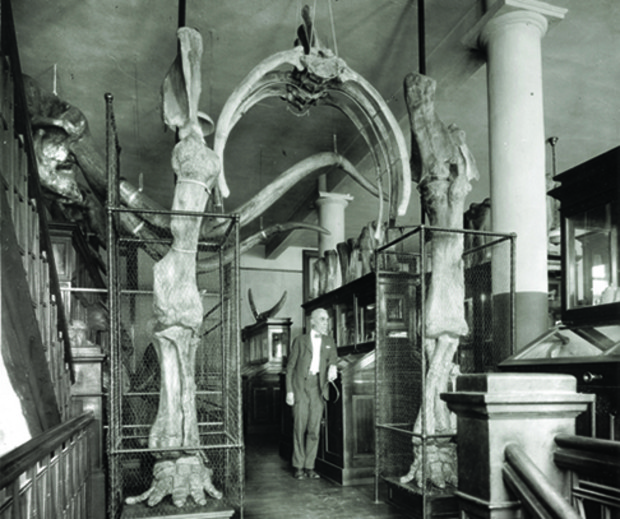 Erwin Barbour stands under an archway that was formed by the Archie fossils in the old NU State Museum. Archie's skull and tusks are shown in the background.