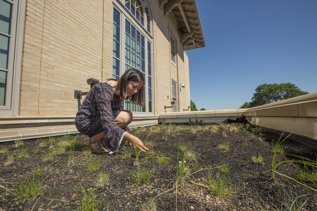 Kylie Tucker examines the plantings in the new green roof at the Rec and Wellness Center on East Campus. Tucker designed the space with assistance from ASUN's Green Fund.