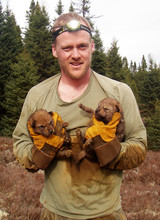 John Benson, assistant professor of vertebrate ecology, holds two wolf pups during a research expedition in Ontario, Canada. Benson has co-authored a new study suggesting that the eastern coyote hunts large prey far less frequently than does the eastern wolf it has replaced at the top of food chains in eastern North America.