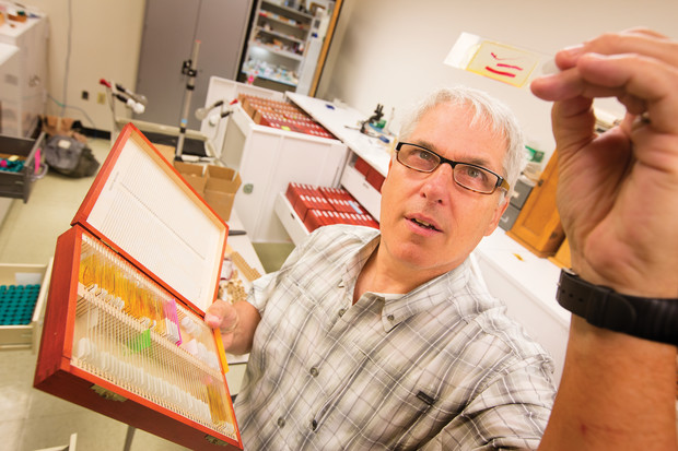 """University of Nebraska State Museum curator and parasitologist Scott Gardner holds a specimen slide in the museum's Harold W. Manter Laboratory of Parasitology. Scientific research from the lab and research specimens are featured in the new exhibition """"Guts and Glory: A Parasite Story"""" at Morrill Hall."""