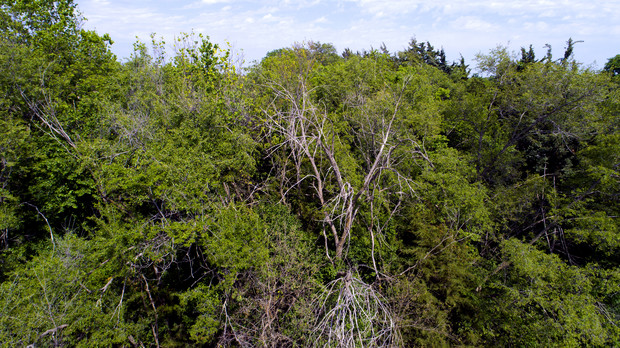 Wide shelterbelts provide forest-like cover for birds and other wildlife.