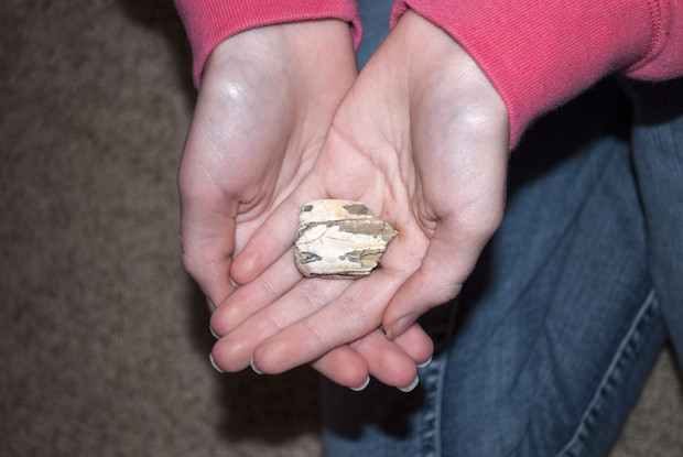 A museum visitor holds a fossilized horse tooth.