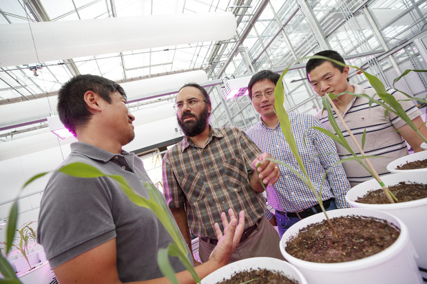 Harkamal Walia (second from left) discusses an experimental plan for the grant at the High Throughput Phenotyping facility at the Greenhouse Innovation Center on Nebraska Innovation Campus. From left is Toshihiro Obata, Hongfeng Yu and Qi Zhang. Not pictured are researchers Chi Zhang and Gota Morota.