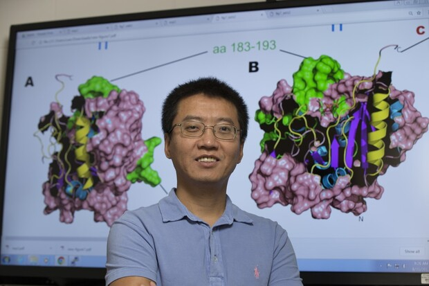 Yanbin Yin, associate professor of food science at Nebraska, has received a four-year, $1.2 million grant from the National Institutes of Health to continue his research.