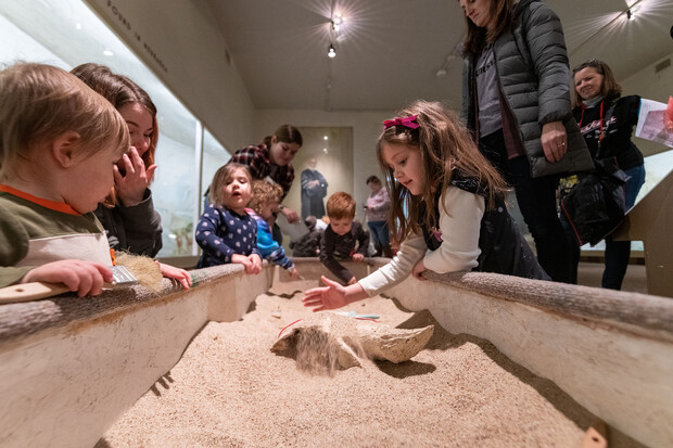 """Archie's Party — 9 a.m. to 5 p.m. June 12 at the University of Nebraska State Museum-Morrill Hall — will feature two large fossil dig sandboxes, as well as a scavenger hunt, the short film """"Carrie Barbour"""" and a variety of craft stations."""