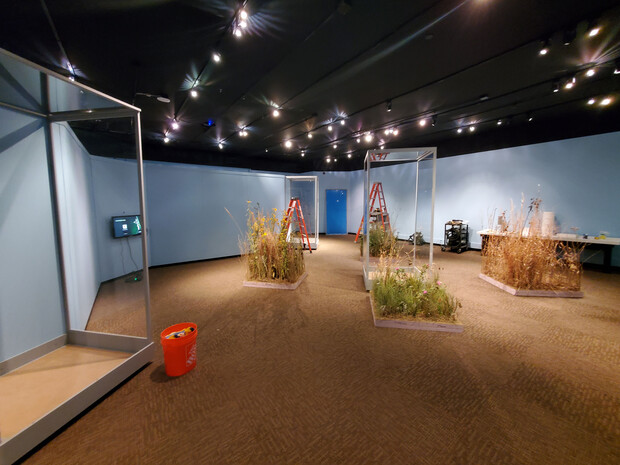 """The University of Nebraska State Museum exhibits team prepares one square meter of prairie plants for each of the four seasons. """"Hidden Prairie"""" opens Oct. 16 and runs through May 2022."""