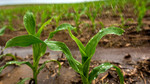 Conference to address advances in water and food security